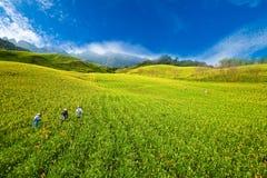 Daylily Feld im Berg Stockfotografie