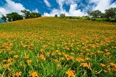 Daylily Feld im Berg Stockfotos