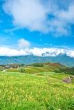 Daylily Feld im Berg Lizenzfreies Stockfoto