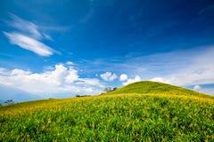 Daylily Feld im Berg Lizenzfreie Stockbilder