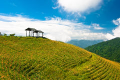 Daylily field in the mountain Stock Images