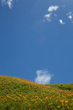 Daylily flower at sixty stone mountatin Royalty Free Stock Photo