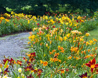 Daylily garden patjh. A path lined with daylilies, Hemerocallis sp, at Berkshire Botanical Garden in Stockbridge Massachuesetts Royalty Free Stock Images