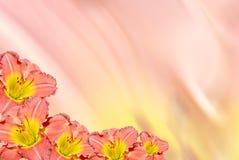 daylily graniczny Zdjęcia Stock