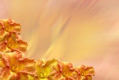 daylily graniczny Zdjęcie Royalty Free