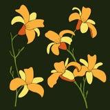 Daylily kwitnie na bkack tle również zwrócić corel ilustracji wektora ilustracja wektor