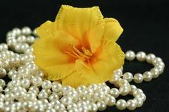 Daylily met parels Stock Afbeeldingen