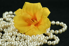 Daylily with pearls. Yellow daylily with pearls on black background stock images