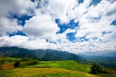 daylily śródpolna góra Obrazy Stock