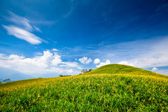 daylily śródpolna góra Obrazy Royalty Free