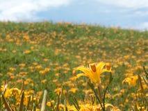 daylily sextio sten för blommamountatin Fotografering för Bildbyråer