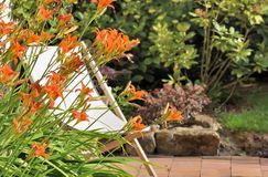 Daylily on terrace Stock Photos