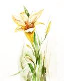 daylily vattenfärg Fotografering för Bildbyråer