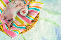 3 Days old Kitty in a Basket Royalty Free Stock Photography