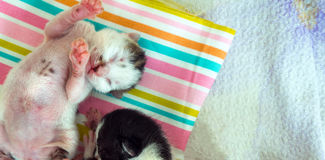 3 Days old Kitty in a Basket. Photo Stock Image