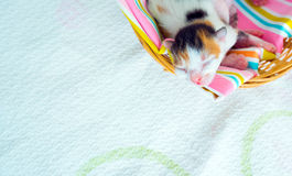 3 Days old Kitty in a Basket Stock Photos