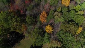 Aerial view of treetops in early autumn. A daytime aerial flyover of colorful trees in Western Pennsylvania in early autumn stock footage