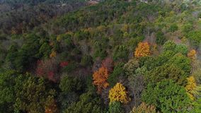 Aerial view of treetops in early autumn. A daytime aerial flyover of colorful trees in Western Pennsylvania in early autumn stock video