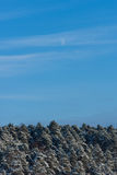 Daytime moon above the snowy forest in the winter. Moon above the snowy forest in the winter Royalty Free Stock Image