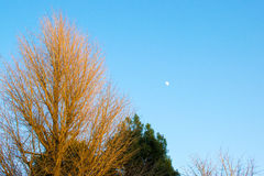 The daytime moon Royalty Free Stock Photo