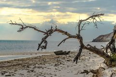 A daytime seascape with a withered tree in the foreground, a sha Stock Image