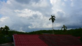 Daytime sky at rubber tree plantation, Timelapse. Daytime at Rubber tree in row at a rubber tree plantation natural latex., Timelapse stock video footage