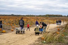 Families set out to pick pumpkins from a pumpkin patch on a chilly fall day. DAYTON, MINNESOTA - OCTOBER 13, 2018: Families set out to pick pumpkins from a royalty free stock images