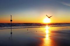 Daytona海滩,佛罗里达,美国地平线 库存照片