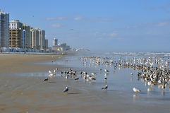 Daytona Beach Florida Royalty Free Stock Photo