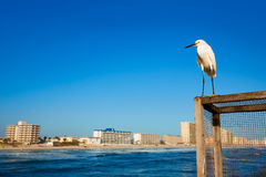 Daytona Beach in Florida from pier US Royalty Free Stock Photo