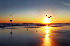 Daytona Beach Florida, USA horisont Arkivfoto