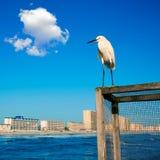 Daytona Beach i Florida från pir USA Fotografering för Bildbyråer