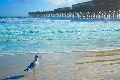 Daytona Beach i Florida med pir USA Royaltyfri Bild