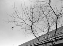 In a Daze. Black and white photo showing tree without leaves royalty free stock photos