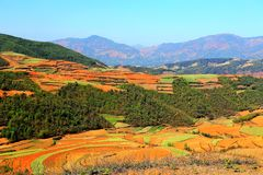The Dazzling Dongchuan Red Soil Scenic Area. Dongchuan Red Soil Scenic Area is located in a warm and humid environment. Iron in the soil is slowly deposited by stock photography