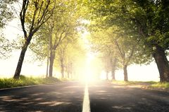 Dazzling light on a tree-lined road. A dazzling light on a tree-lined road stock photography