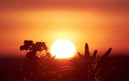 Dazzling sun and plants Royalty Free Stock Images