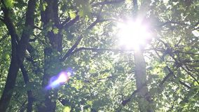 Dazzling Sunshine Through Canopy stock video