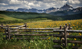 Dazzling Wildflowers, Dazzling Mountains and Meadows, Telluride, Colorado Stock Images