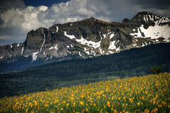 Dazzling Wildflowers, Dazzling Mountains and Meadows, Telluride, Colorado Stock Photos