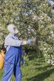 Dbający dla owocowych drzew, uprawiający ogródek Ogrodniczka kropi drzewa zdjęcie stock