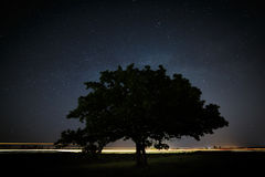 Dębowy drzewo z zielenią opuszcza na tle nocne niebo Obraz Stock