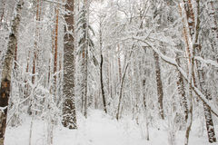 Début de l'hiver Images libres de droits