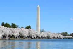 DC Вашингтона, Колумбия, США - 11-ое апреля 2015: Вашингтон-DC-памятник-вишн-цветение Стоковое Изображение RF