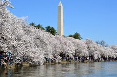 DC Вашингтона, Колумбия, США - 11-ое апреля 2015: Вишневые цвета от шлюпки затвора приливного таза, DC Вашингтона Стоковые Изображения