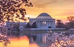 Восход солнца фестиваля вишневого цвета DC Вашингтона Стоковое Изображение