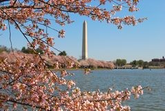 dc-monument washington Royaltyfri Foto