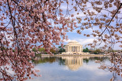 DC in Spring Stock Images