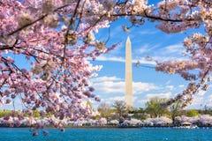 DC at the Tidal Basin. Washington DC, USA at the tidal basin with Washington Monument in spring season stock images