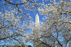 DC Washignton, Колумбия, США - 11-ое апреля 2015: Вашингтон-DC-памятник-вишн-цветение Стоковые Фото